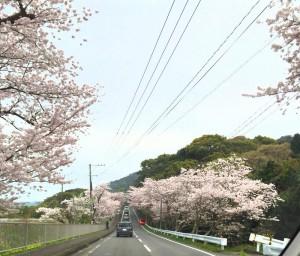 桜坂(長崎県