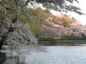 三ッ池公園(神奈川県)
