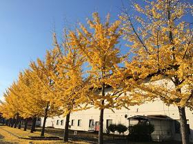 新井田公園(青森県)