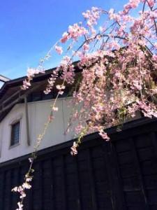 桜 日本 角館