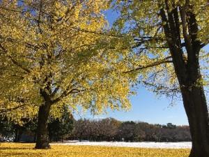 雪景色と金色のじゅうたん