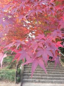 賀茂神社(仙台市)②