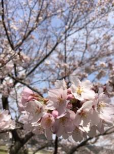 復興支援 桜 国際センター