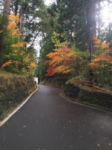 仙台大崎八幡宮