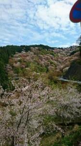 奈良吉野山2